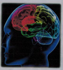 ストレスを受ける脳